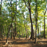 団体紹介『武蔵野の森を育てる会』